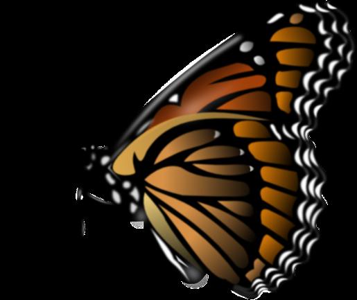 butterflyfubi